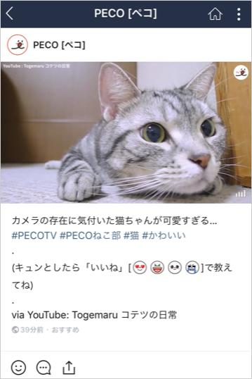 画像:PECO[ペコ]LINEアカウント画面